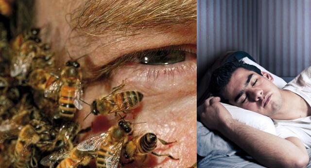 Conoce el significado de soñar con abejas que te pican.