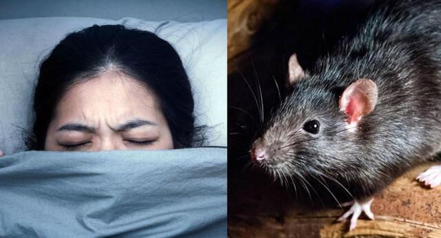 ¡Que nervios! Conoce el significado de soñar con estos roedores que te suben al cuerpo.