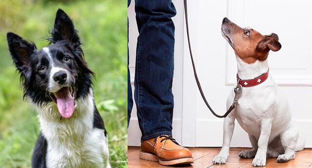 Adiestra a tu perro para que no ladre cuando tocan la puerta.