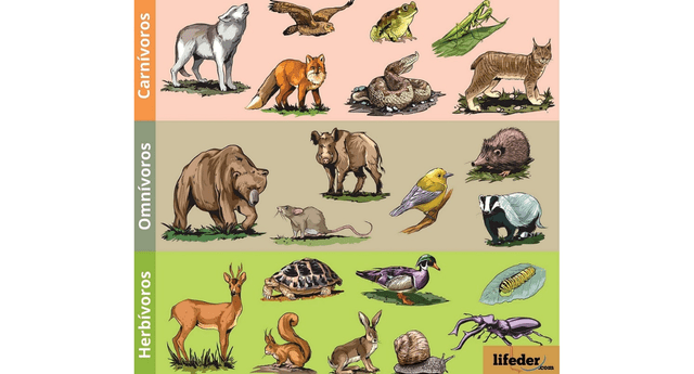 Se clasifican en: herbívoros, omnívoros, filtradores y descomponedores.