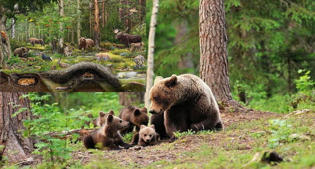 Los animales del bosque se han adaptado a este hábitat.