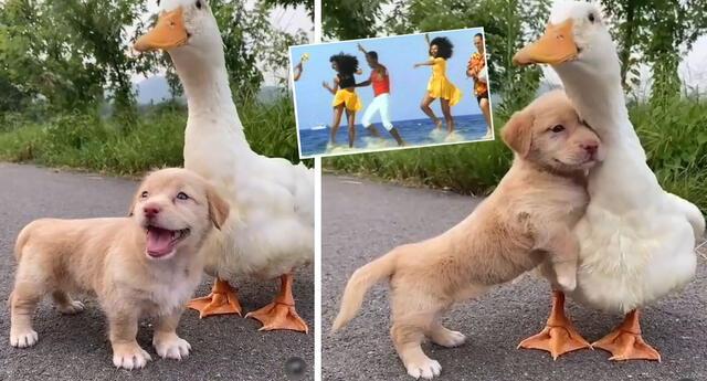 Peculiar video de los animales se hizo viral en las redes sociales.