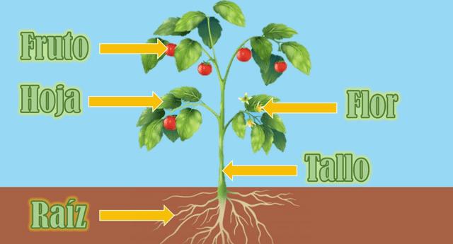 Las flores tienen el rol principal en la distribución de semillas