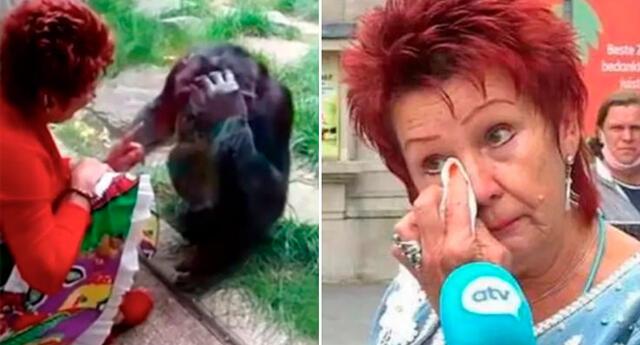 La mujer belga asegura que tiene un romance con un chimpancé desde hace 4 años.