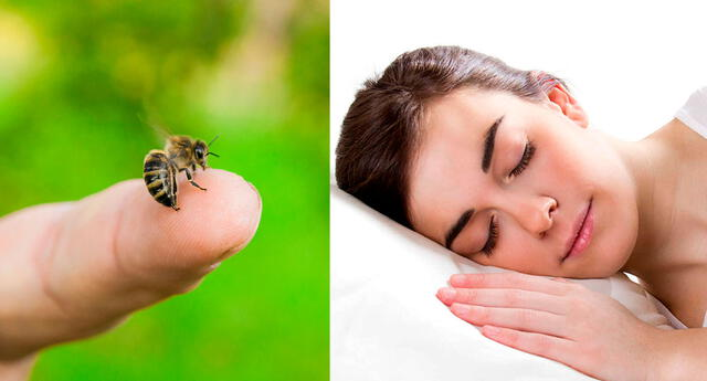 Significado de soñar que te pica una abeja