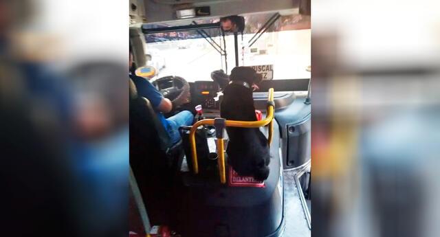 Una pasajero logró capturar la curiosa escena, dejando a muchos usuarios conmovidos.