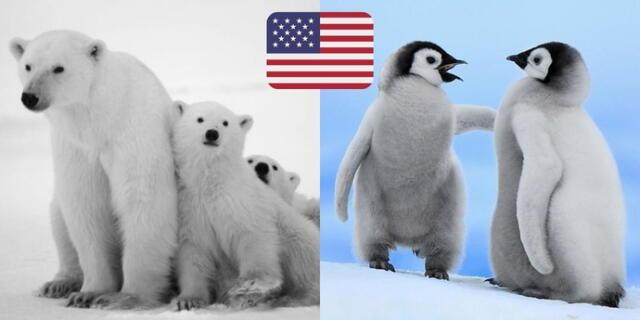 Joe Biden frenó perforaciones petroleras en área protegida de osos y caribúes, en Alaska.