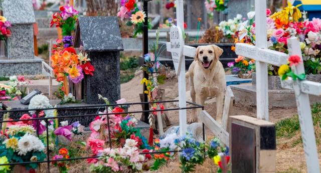 Bobby alivia el dolor de los deudos en el cementerio de Roca, Argentina.