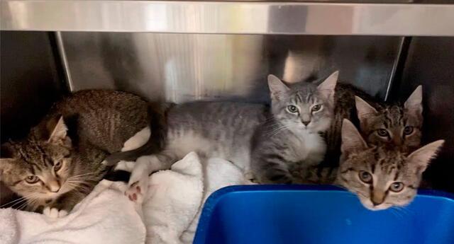Se rescataron 10 gatos, pero es posible que algunos de ellos no sobrevivan.