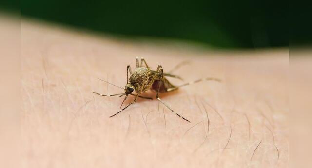 Especialistas indican que mediante test de bajo costo se puede facilitar la detección del parásito.