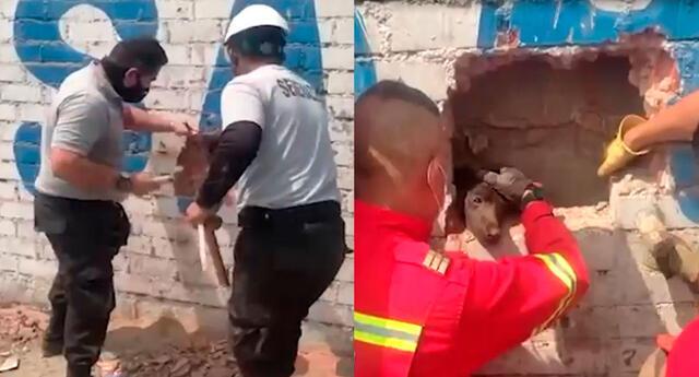 PNP  y bomberos rescatan a perrito atrapado