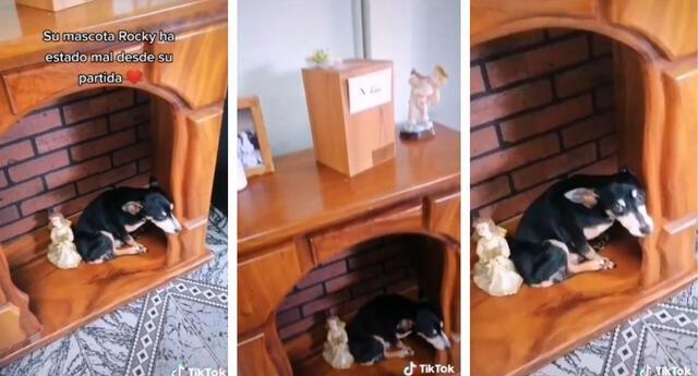Tiktok: perro no se quiere separar de las cenizas de su dueño fallecido. Foto: Captura de pantalla