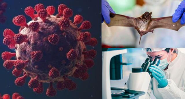 ¿Podría infectar a humanos? Esto dicen los expertos.