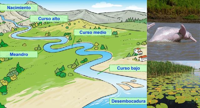 Los ríos tienen un ecosistema de diversas especies.