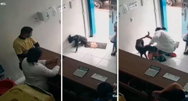 Perro callejero pidió ayuda en la veterinaria para sanarse de su pata.