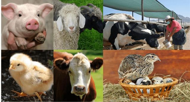 La mayoría de estos animales son utilizados para el consumo directo.