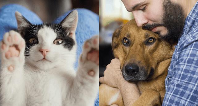 Dale un hogar a una mascota que lo necesite.